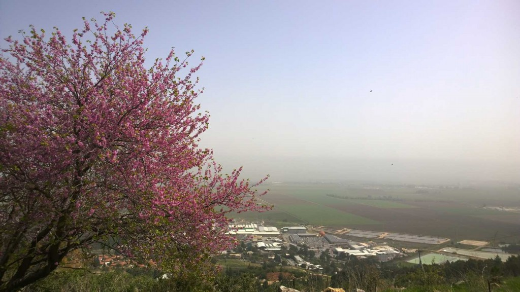 JNF-KKL Pflanzungen oberhalb des Hula-Valleys, Foto Christian Seebauer