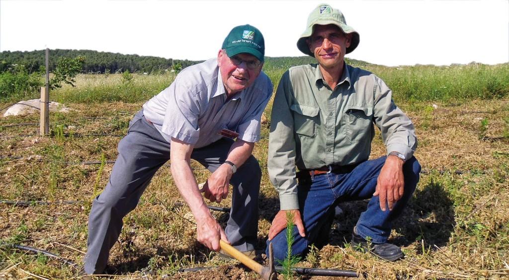 Beim JNF-KKL in Israel kann man selbst einen Baum pflanzen