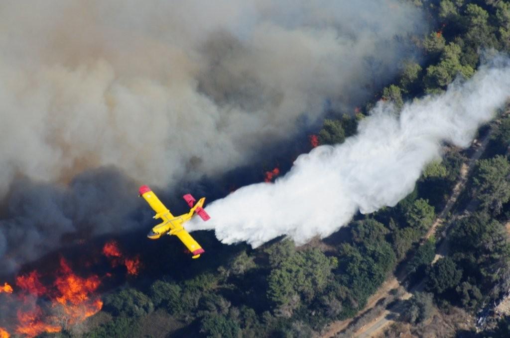 Waldbrände im Karmel Gebirge, KKL Wiederaufforstung