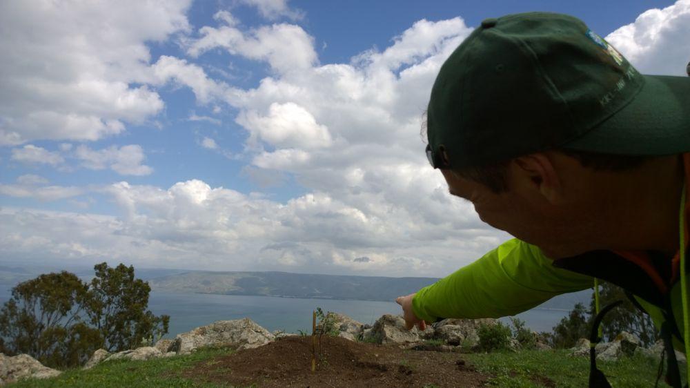 JNF-KKL pflanzt hoch oben über dem See Genezareth
