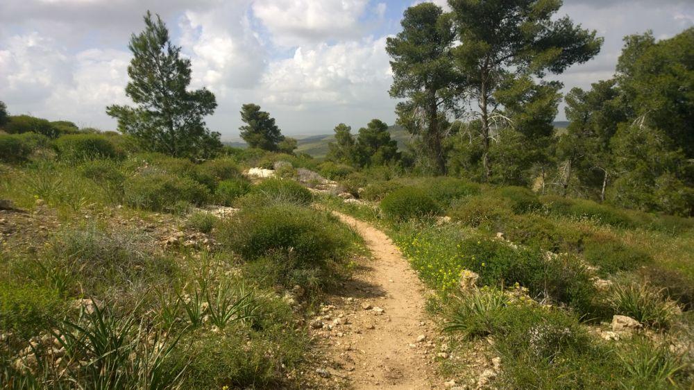 Wald und Wiesen im grünen Israel bei Mejtar - dank JNF-KKL-Spendern. Foto: Christian Seebauer