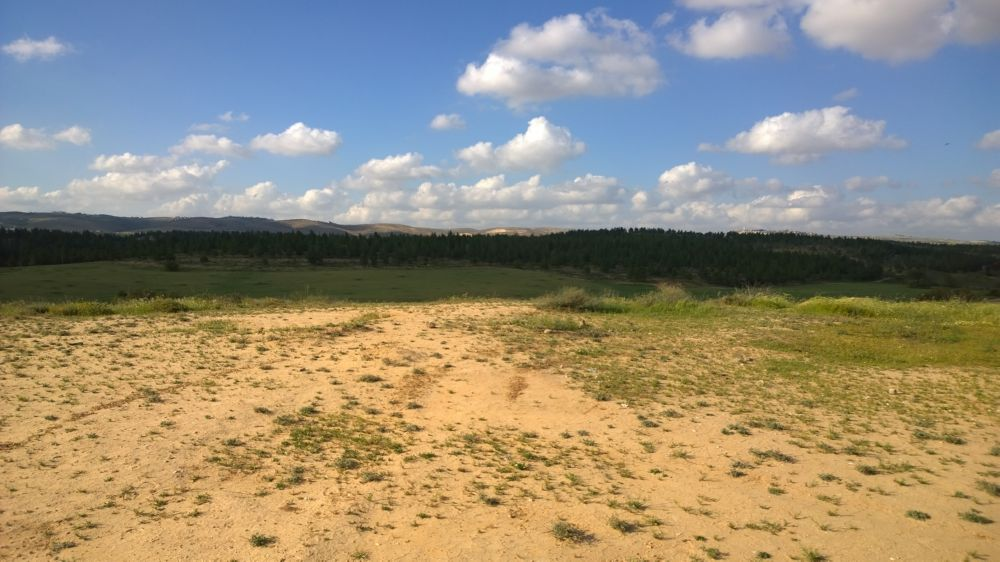 Meitar-Wald des JNF-KKL, Foto: Christian Seebauer