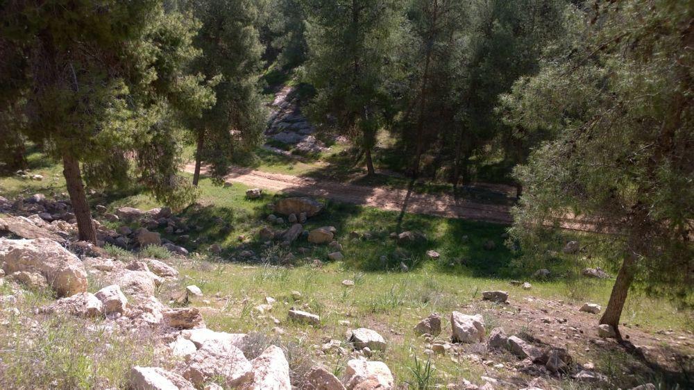 Der Yatir-Wald, aufgeforstet durch den KKL