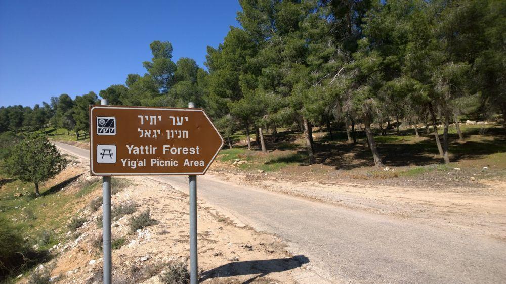 Aufforstung des Yattir Forest durch den JNF-KKL