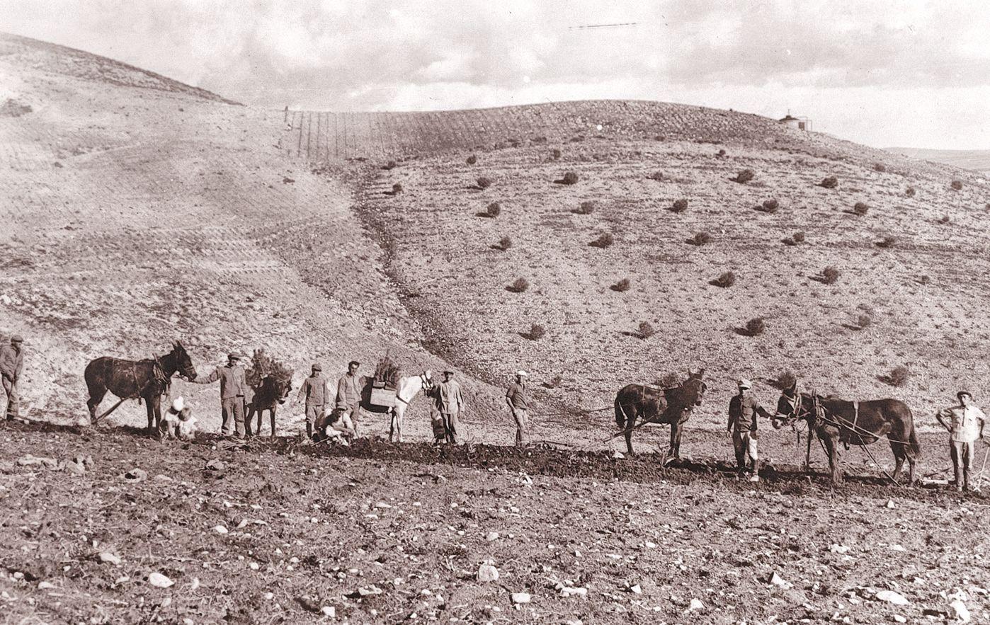 KKL Aufforstung des Balfour-Waldes 1928