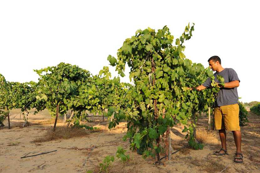 KKL Tröpfchenbewässerung im Negev