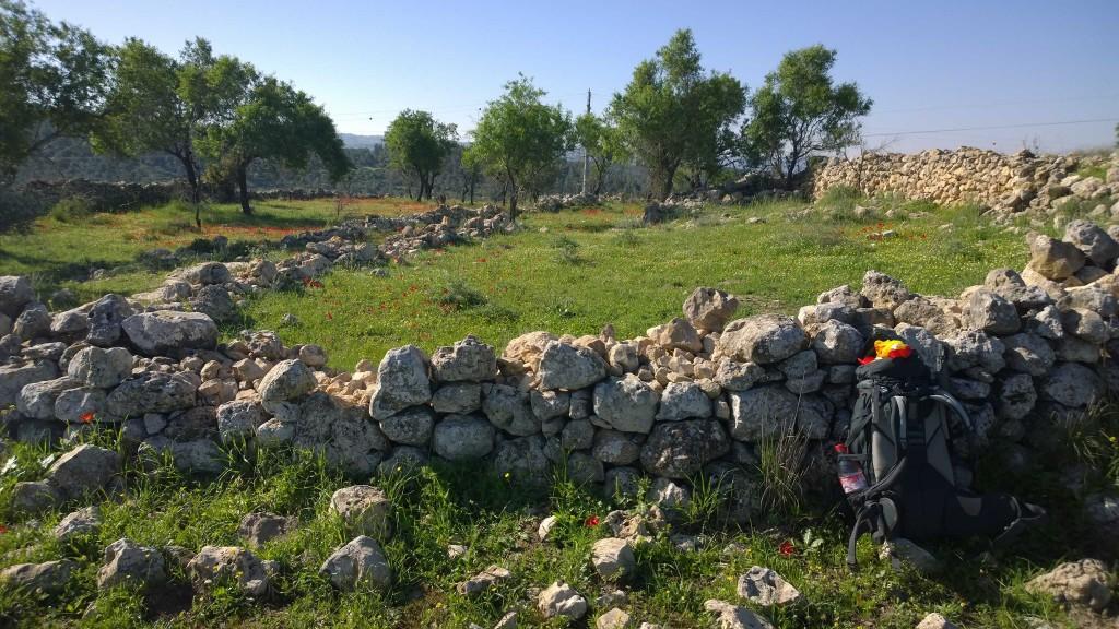 KKL Wälder entlang des Israel National Trails