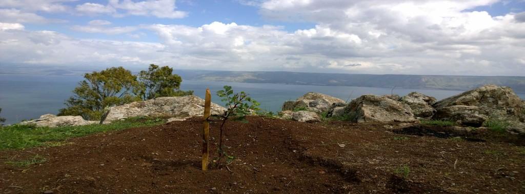 JNF-KKL Baumpflanzung oberhalb des See Genezareth