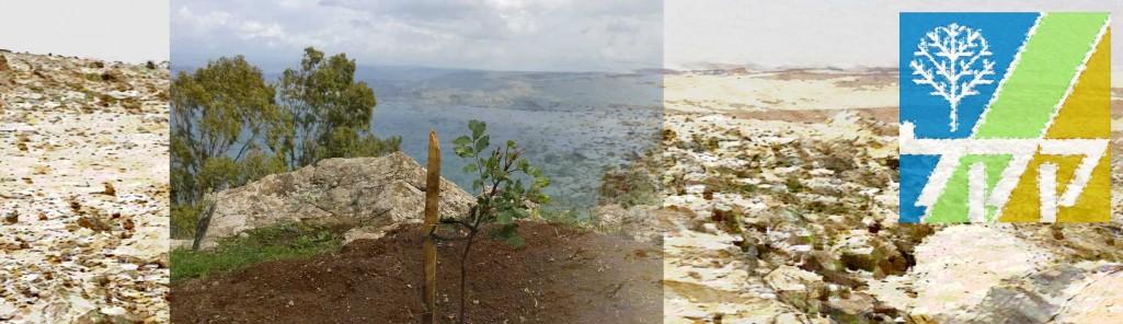 Baumpflanzung Keren Kayemeth LeIsrael (KKL) in Israel, Foto Christian Seebauer