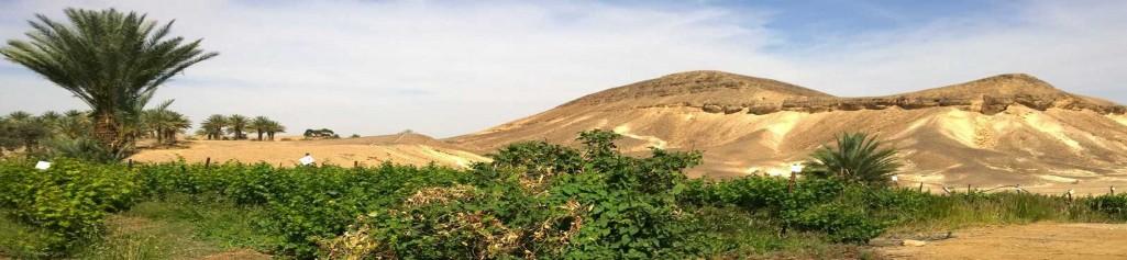 KKL macht die Wüste grün